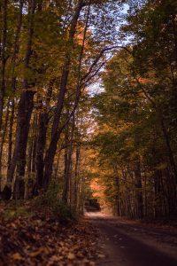 autumn tunnel of trees