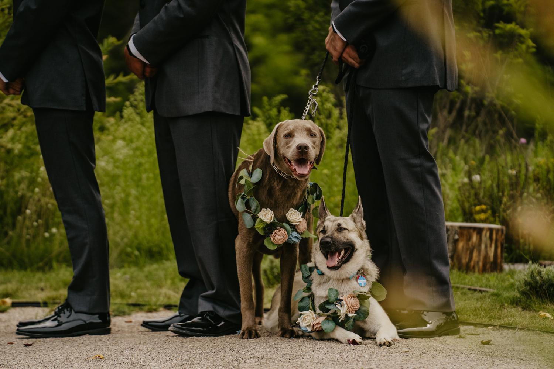 Traverse City Wedding Photographer